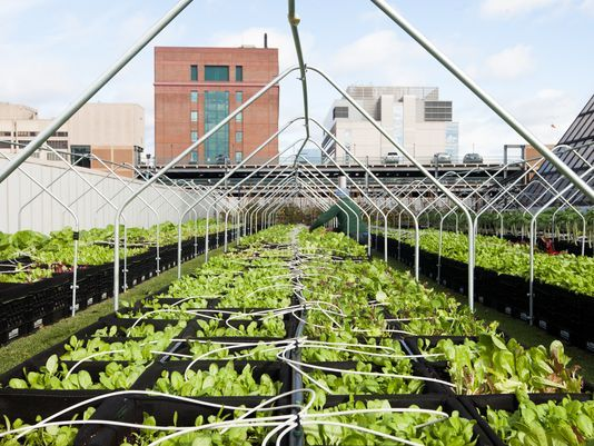 Boston Medical Center's rooftop farm