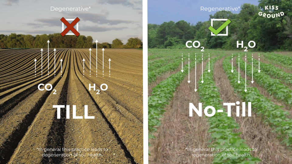 Till vs no till image from Kiss the Ground