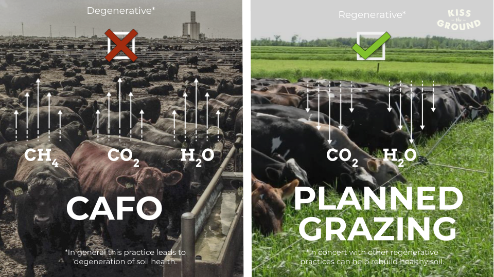 CAFO vs planned grazing image from Kiss the ground